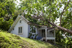 How to deal with a fallen tree in Waipahu, HI
